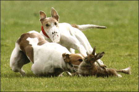 "why coursing clubs don't like ""unauthorised photography""..."