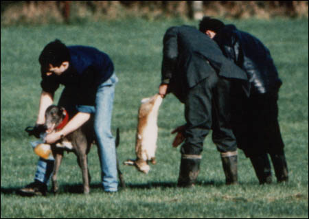 A scene hare coursing officials don't want anyone to film...