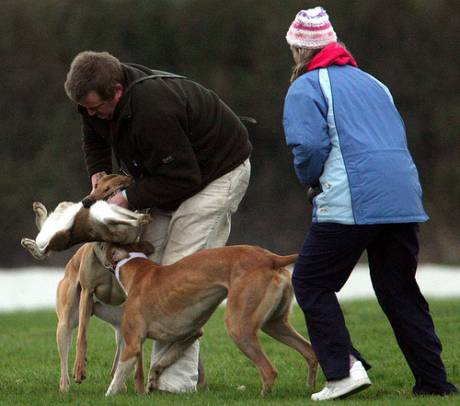 "Hare Coursing: A ""Sport""?"