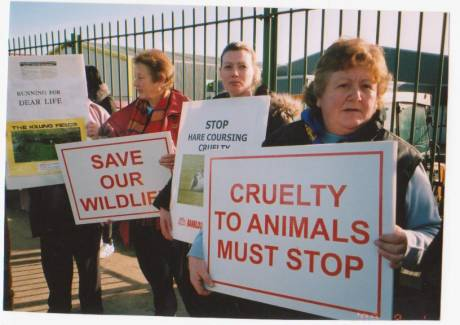 Calling for  ban on hare coursing in Ireland...